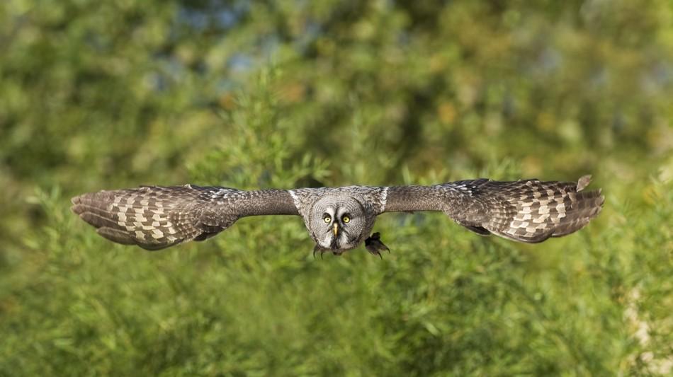 locarno-falconeria-237.jpg
