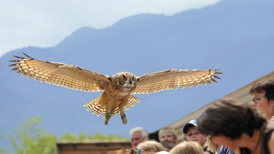locarno-falconeria-238.jpg