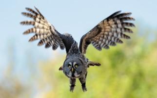 locarno-falconeria-314.jpg