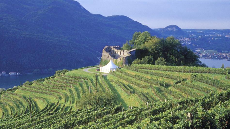 castello-di-morcote-vigneti-865-3.jpg