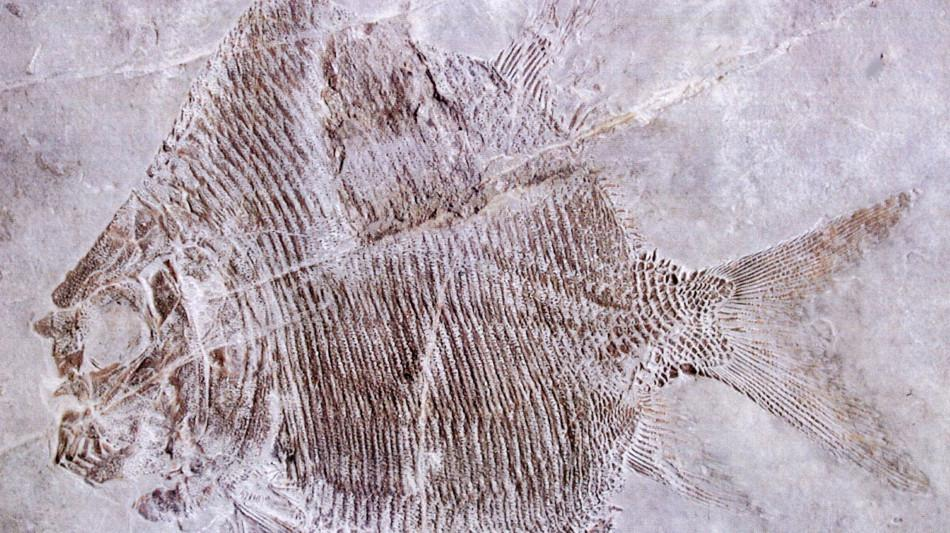 monte-san-giorgio-fossili-785-0.jpg