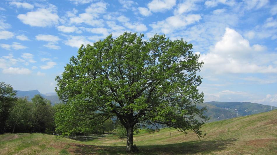 morcote-albero-vicania-868-0.jpg