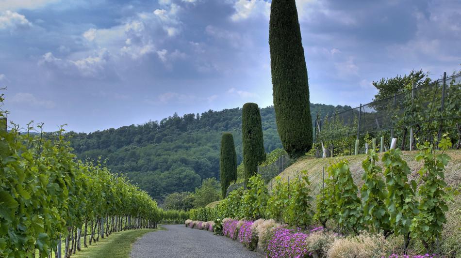stabio-sentieri-viticoli-montalbano-869-0.jpg