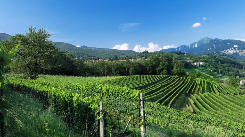 stabio-sentieri-viticoli-vigneti-880-0.jpg