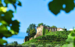 kellerei-castello-di-morcote-1392-0.jpg