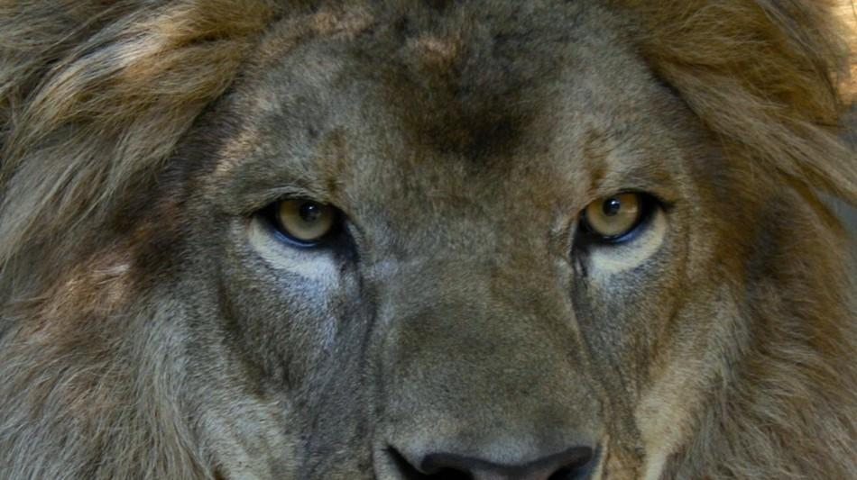 magliaso-zoo-al-maglio-lowe-tiere-1415-0.jpg