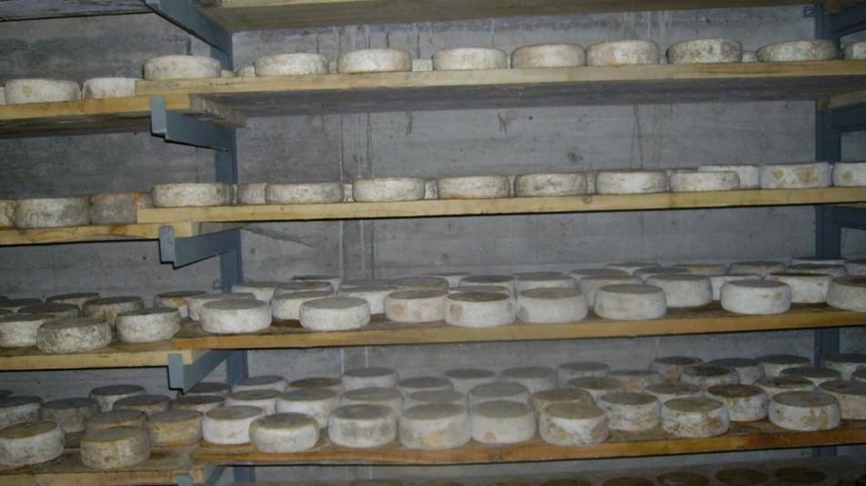 formaggio-monte-lema-1617-0.jpg