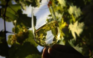An der Weinlese mitmachen