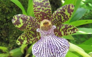 Es blüht an der LocarnOrchidea