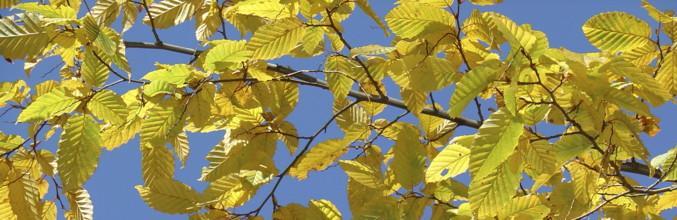 natura-foglie-dautunno-1729-0.jpg