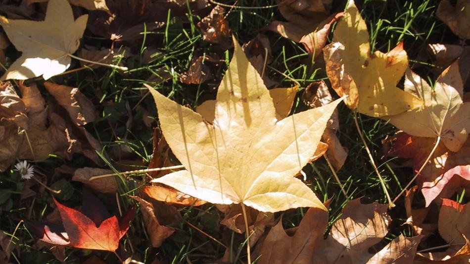 natura-foglie-dautunno-1767-1.jpg