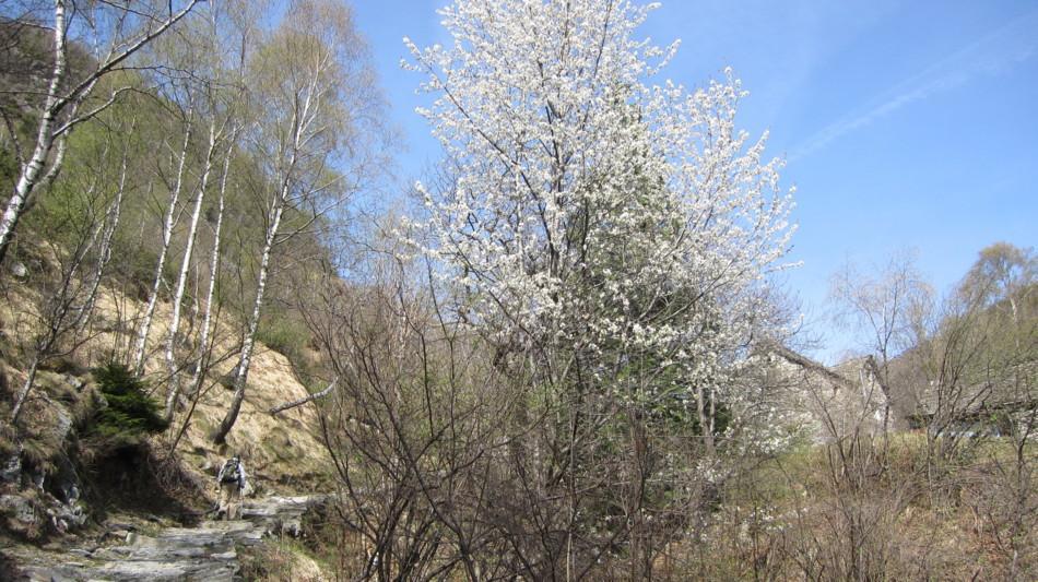 onsernone-sentiero-del-signor-geiser-901-0.jpg