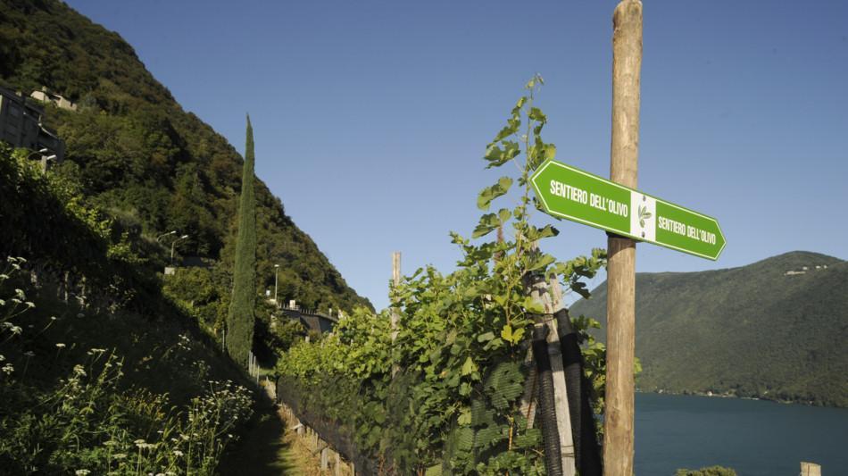 sentiero-degli-ulivi-castagnola-1927-0.jpg