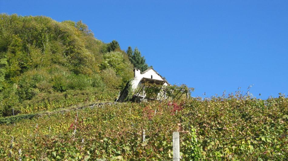 gudo-weinberg-wanderweg-2564-0.jpg