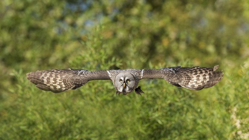 locarno-falconeria-falknerei-237-1.jpg