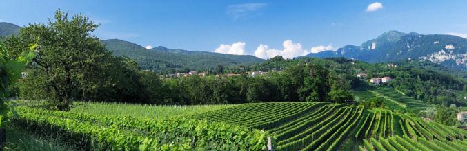 stabio-sentieri-viticoli-vigneti-2552-0.jpg