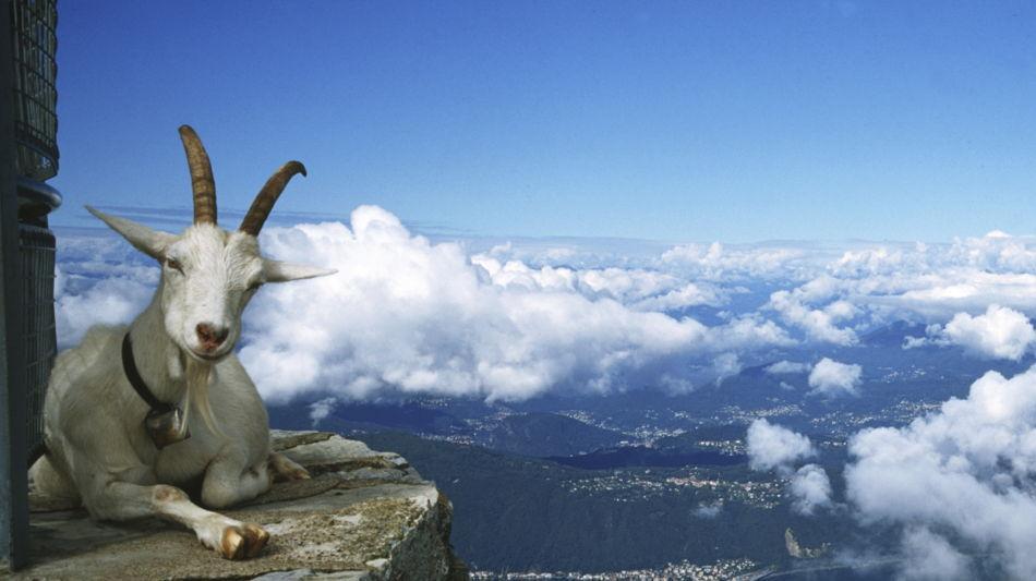 monte-generoso-panorama-ziege-248-0.jpg