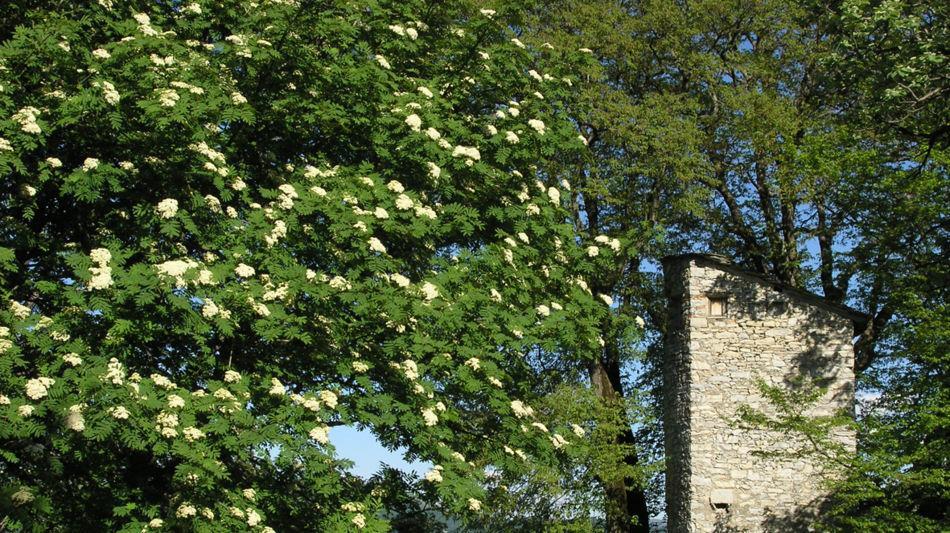 monte-generoso-roccolo-191-0.jpg