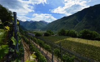 boldini-vini-3775-0.jpg
