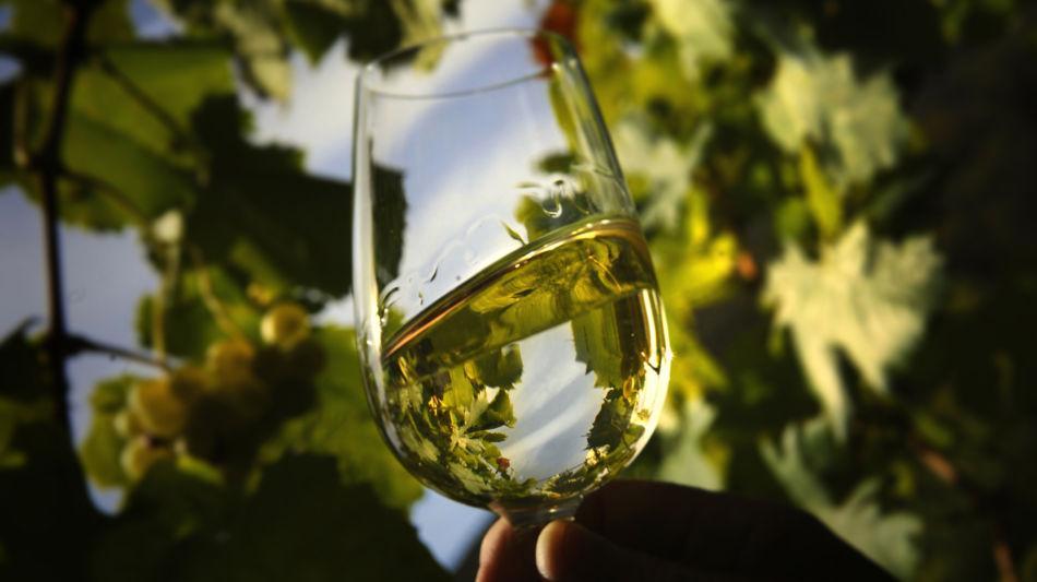 foto-bicchiere-vino-2967-0.jpg