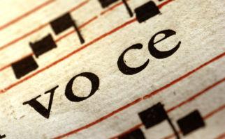 Stimmen aus den Innenhöfen