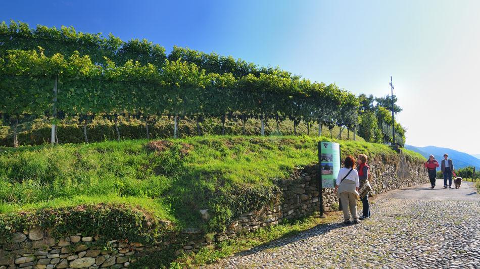 mendrisio-sentieri-viticoli-vigneti-881-0.jpg