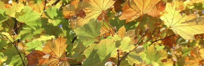 natura-foglie-dautunno-3941-0.jpg