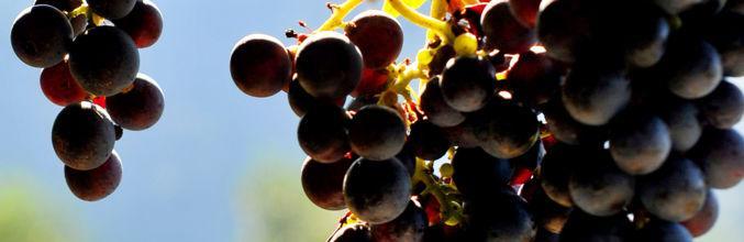 vico-morcote-cantina-castello-di-morco-3813-0.jpg