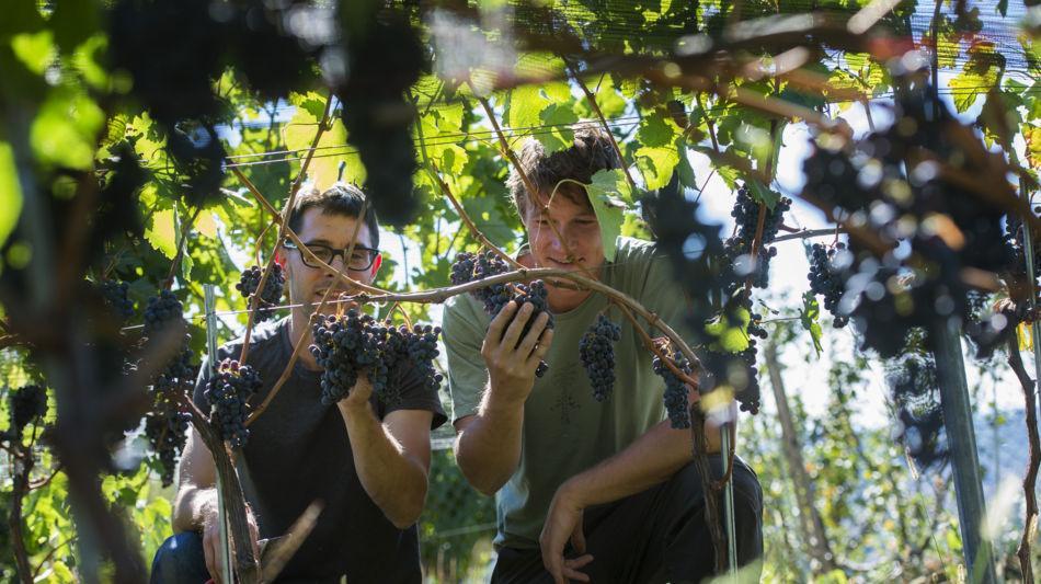 mendrisio-azienda-vitivinicola-fawino-4005-0.jpg