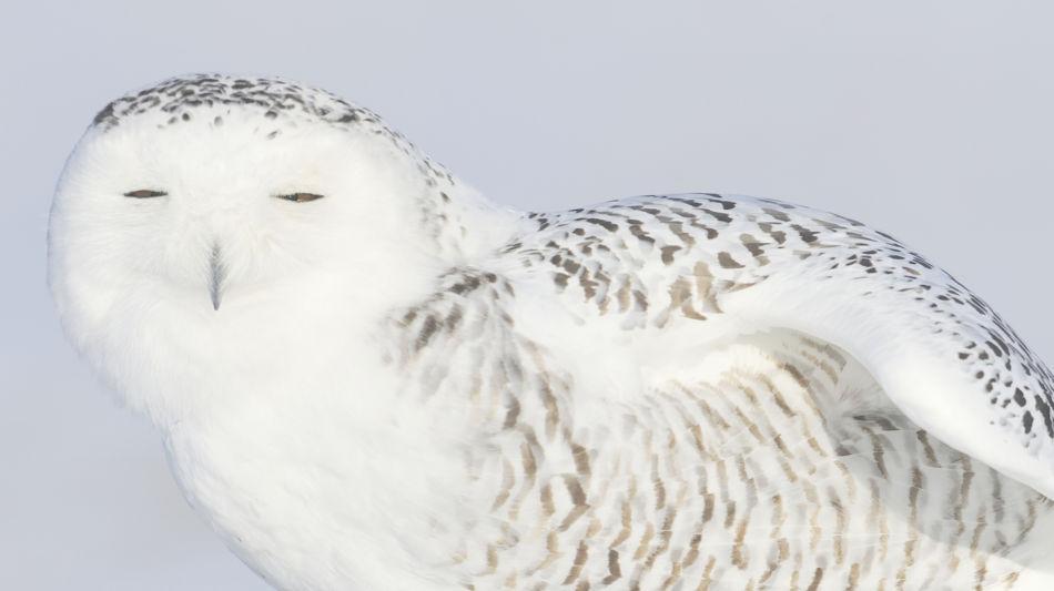 locarno-falconeria-inverno-4163-0.jpg