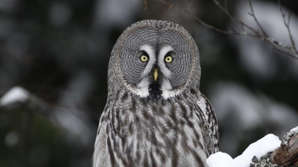 locarno-falconeria-inverno-4164-0.jpg