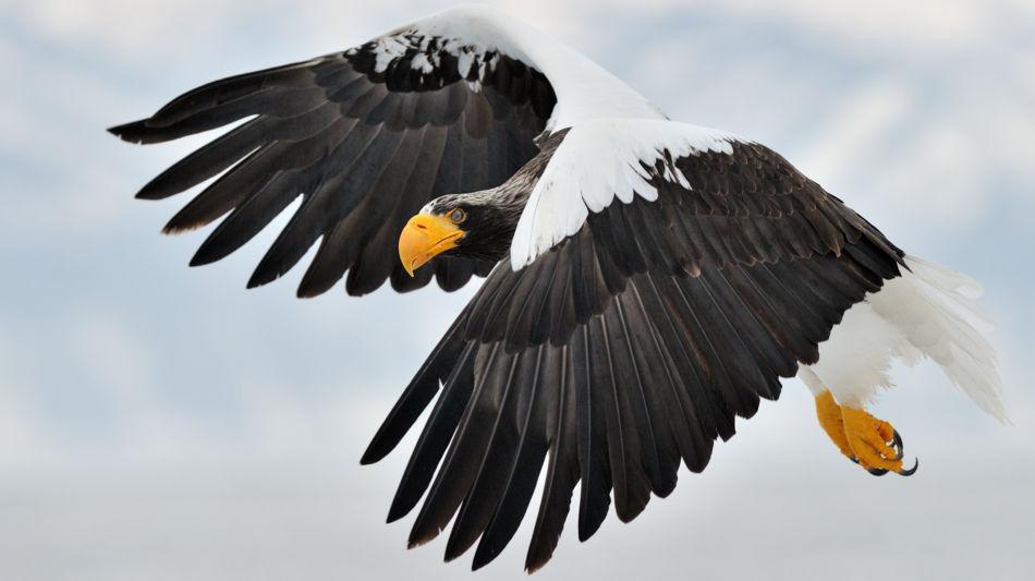locarno-falconeria-inverno-4165-0.jpg