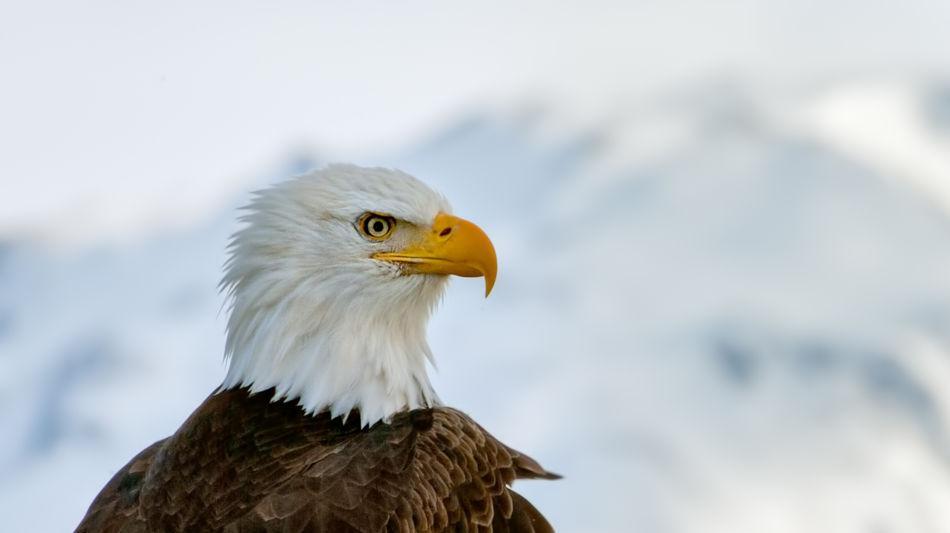 locarno-falconeria-inverno-4167-0.jpg