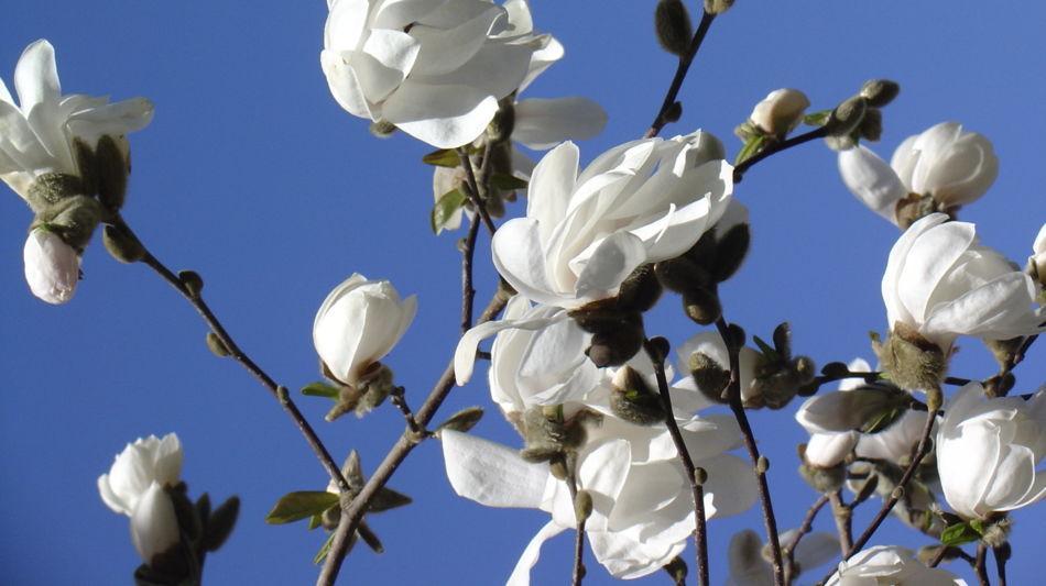 gambarogno-parco-botanico-del-gambarog-336-0.jpg