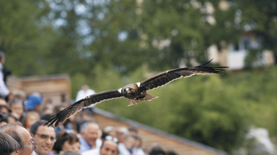 locarno-falconeria-236-0.jpg
