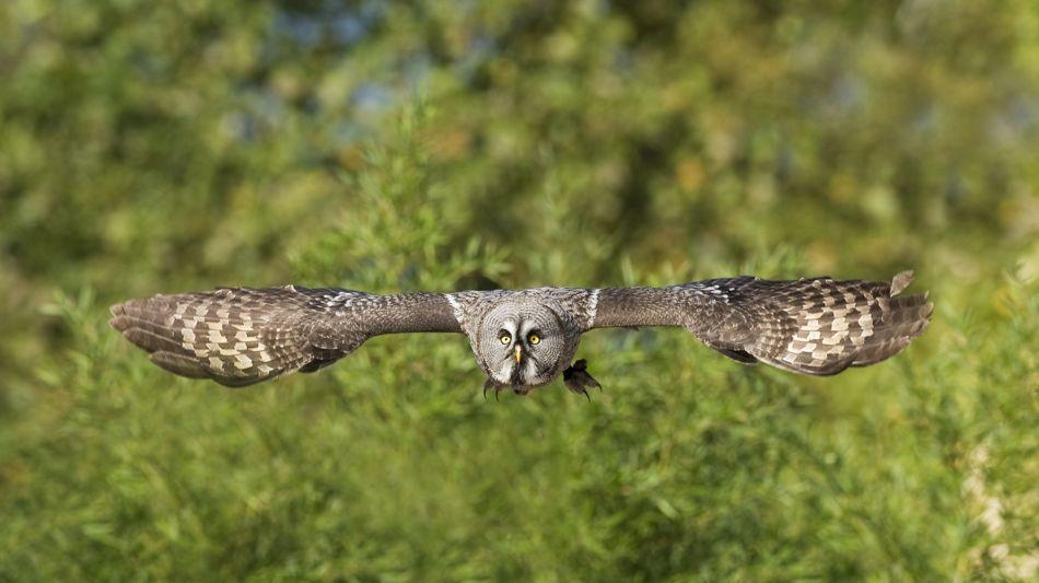 locarno-falconeria-237-0.jpg