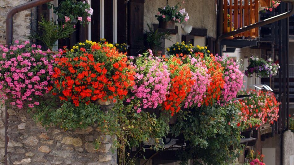 balcone-fiorito-6407-0.jpg