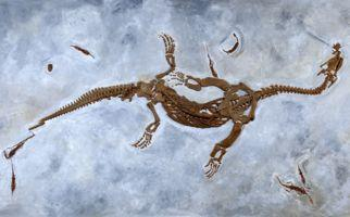 meride-fossilienmuseum-monte-san-giorg-770-0.jpg