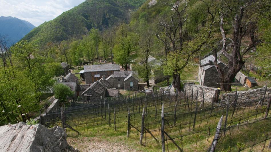 monte-carasso-curzutt-6415-0.jpg