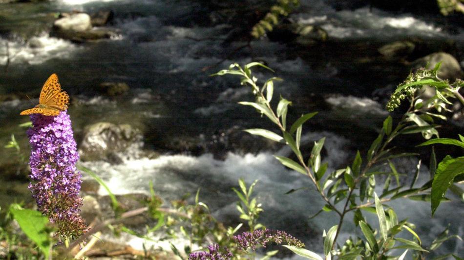 natura-in-valle-morobbia-6408-0.jpg