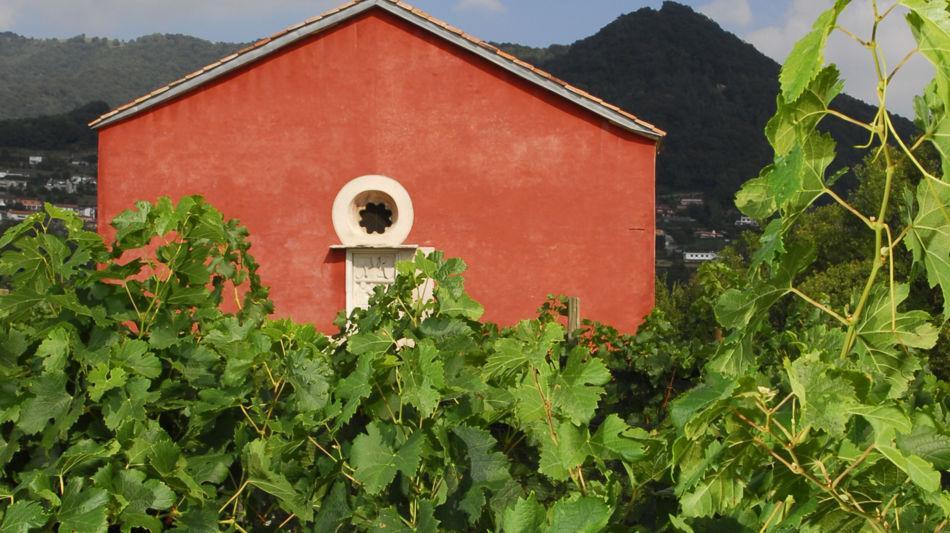 castel-san-pietro-chiesa-rossa-vigneto-6841-0.jpg