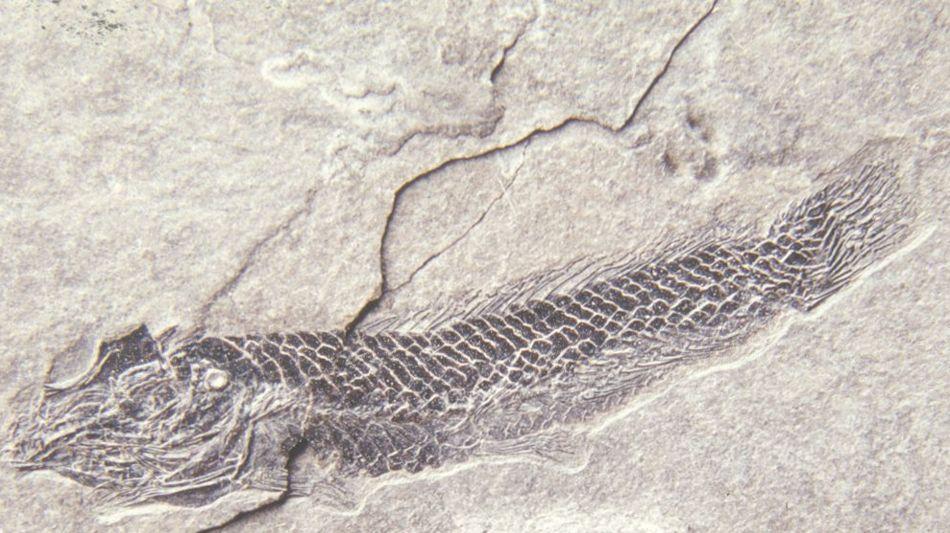 meride-besania-museo-dei-fossili-monte-6469-0.jpg
