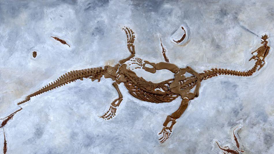 monte-san-giorgio-fossili-6458-2.jpg