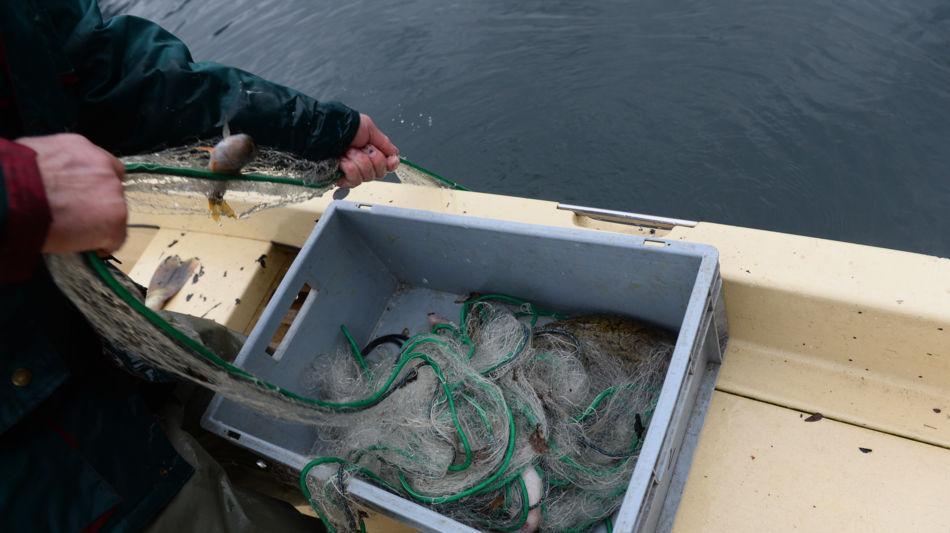riva-san-vitale-pesca-con-reti-6768-0.jpg