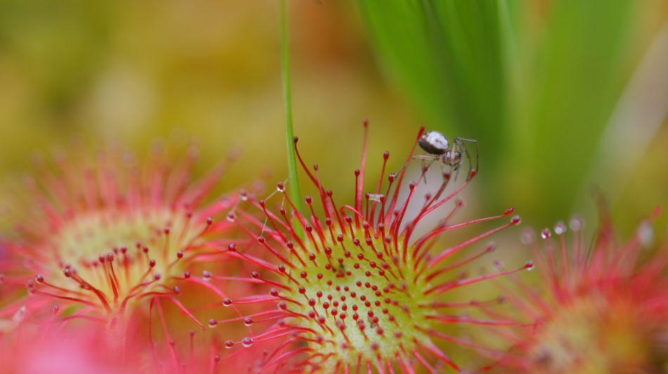 flora-e-fauna-del-lucomagno-7461-1.jpg