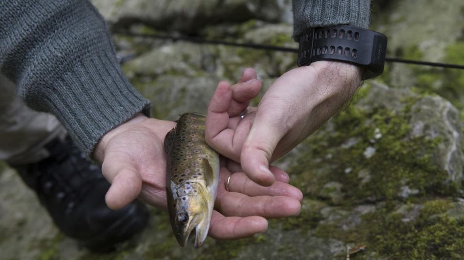 trota-pescata-nel-fiume-7596-0.jpg