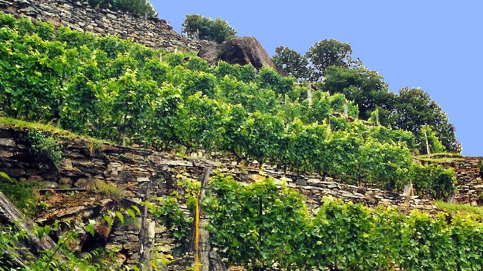 biasca-sentieri-viticoli-vigneti-8183-0.jpg