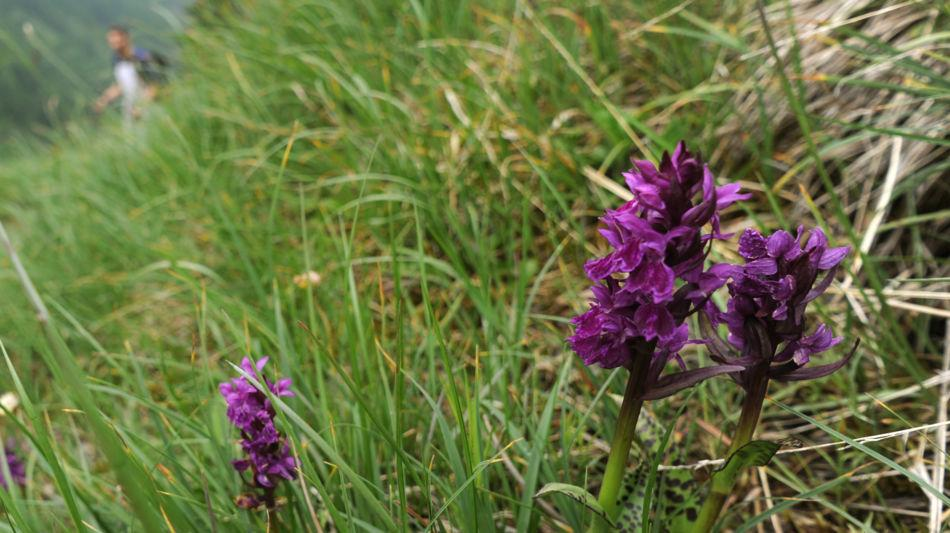 flora-alpina-8121-0.jpg