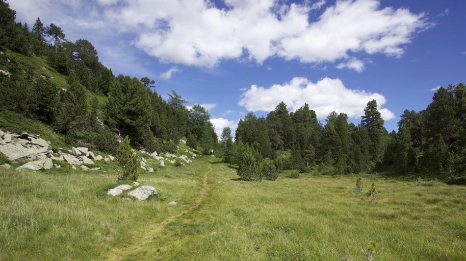 riserva-forestale-di-selva-secca-lucom-6473-1.jpg
