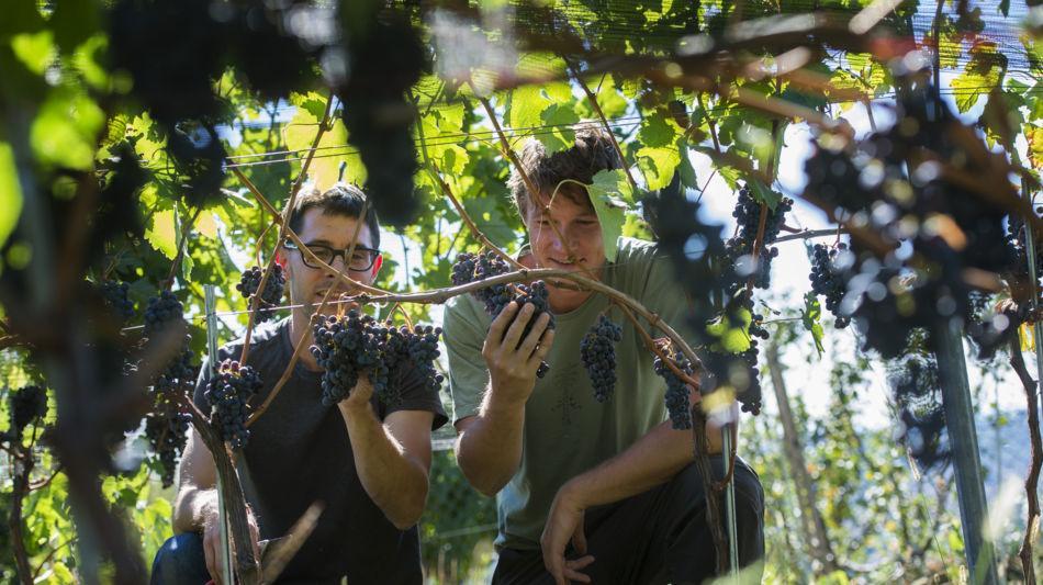 azienda-vitivinicola-fawino-4005-0.jpg